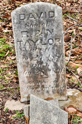 cemetery mississippi lucedale georgecounty larrybell larebel taylorcemetery larebell