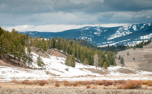 Spring in north Yellowstone | by Sheila Newenham