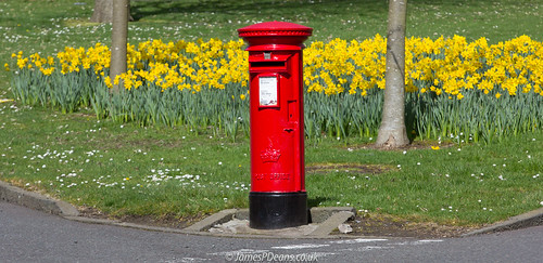 bathgate postbox landscape plants gb westlothian red daffodils colour britain spring unitedkingdom nature scotland lothian europe uk season
