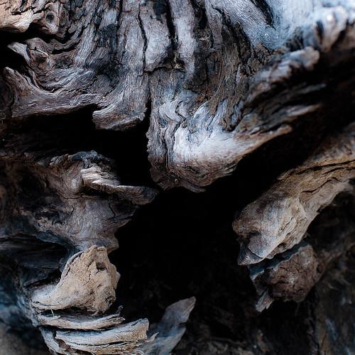 wood light abstract beach square log nikon natural decay erosion driftwood treetrunk weathered d5000 mccormickwoodsnaturepreserve noahbw
