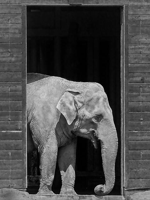 Elephant in a doorway