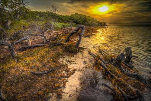 brown clouds sunrise honda keys florida bahia algae hdr sandspurbeach deadtrunks sargassoweed
