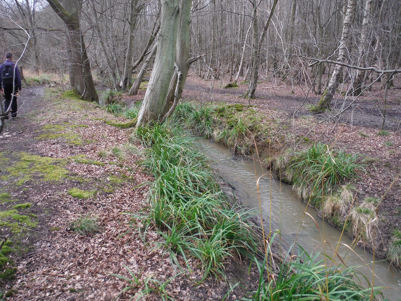 Spittal Brook, Danemead Wood SWC Walk 168 Broxbourne Circular