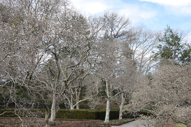 金, 2016-03-11 13:18 - Brooklyn Botanic Garden