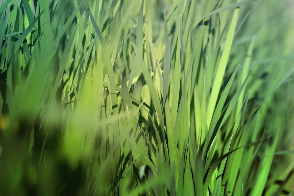 blur-dreamy-texture-texturepalace-2