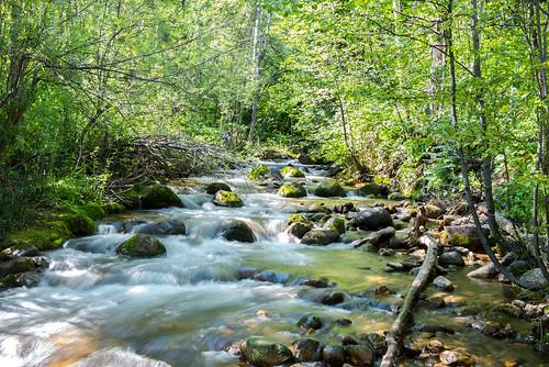 longexposure trees nature flow moss rocks stones beavercreek
