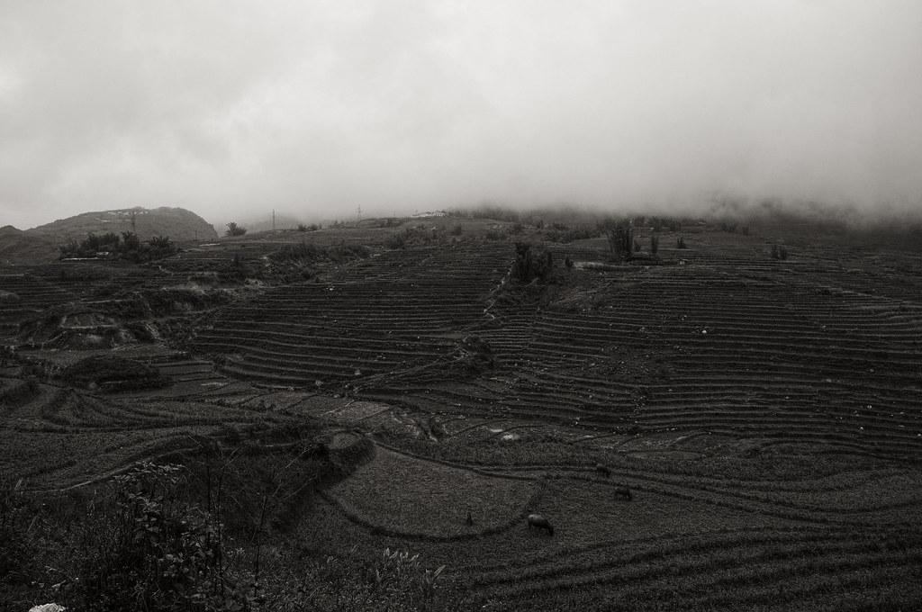A field of Sapa in winter