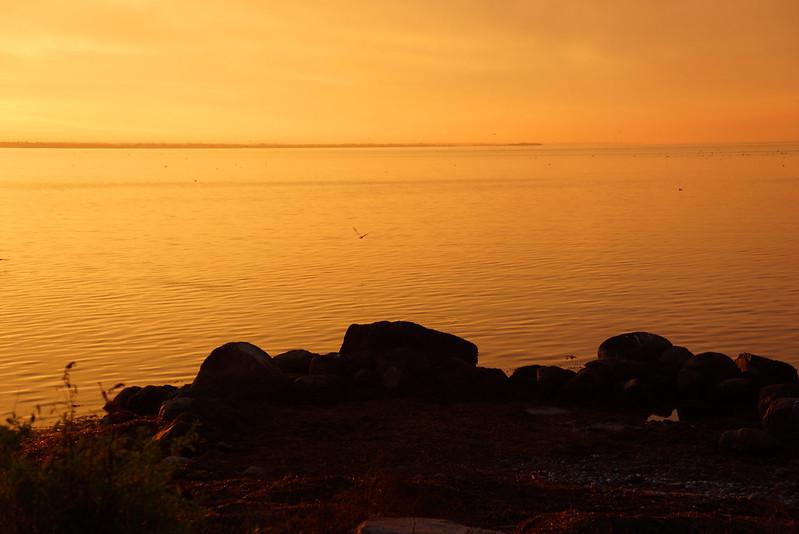 Det-gule-hav
