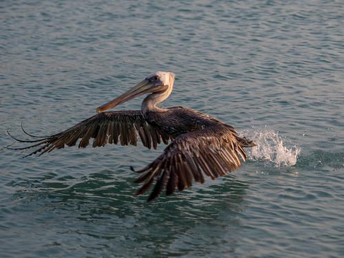 takeoff | by ramcewan