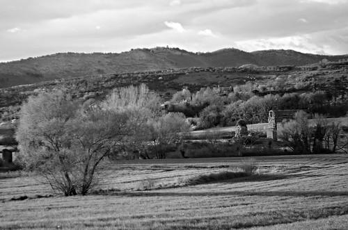 pentax k5 2016 countryside aqueduct lazio italy tree smcpentaxm50mmf17 stefanorugolo