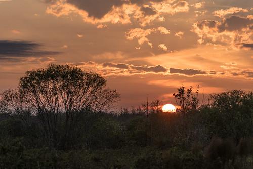 evening nikon d750 nikkor goldenhour birdrookeryswamp