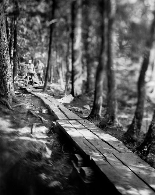 Pathmakers - Boardwalk