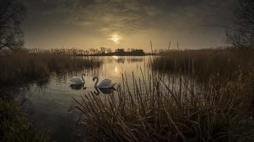 cloud sun lake reflection water pool birds sunrise reeds landscape dawn swan pond miltonkeynes fisheye swans 8mm willen samyang