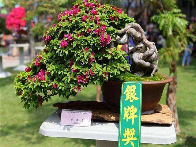 Festival das Orquídeas de Taiwan54