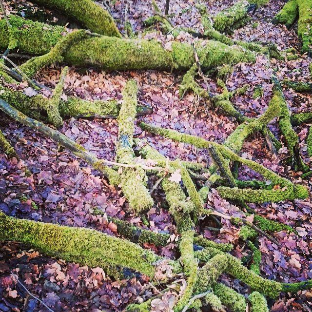 Untitled. © t.t.a.b 2015 - #trees...