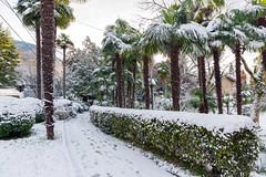 snow in the subtropics