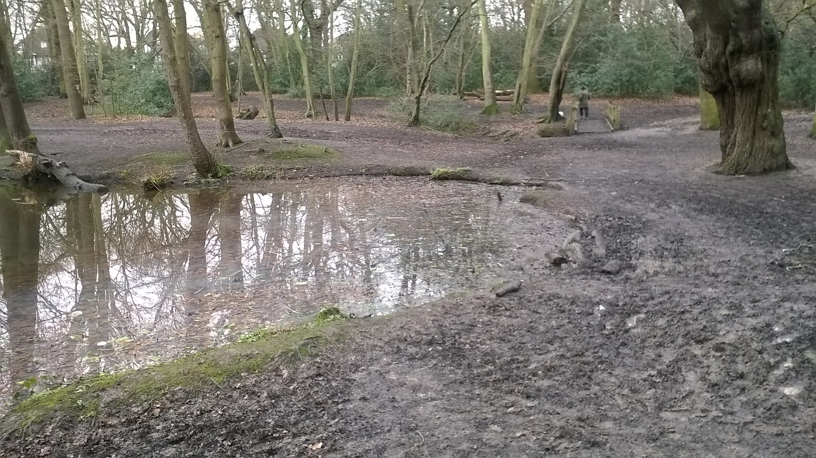 Pool's end near Chingford Muddy Epping Forest