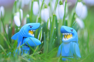 7/2.2016 - when the first sharks appear in the garden, it's a sure sign of spring | by julochka