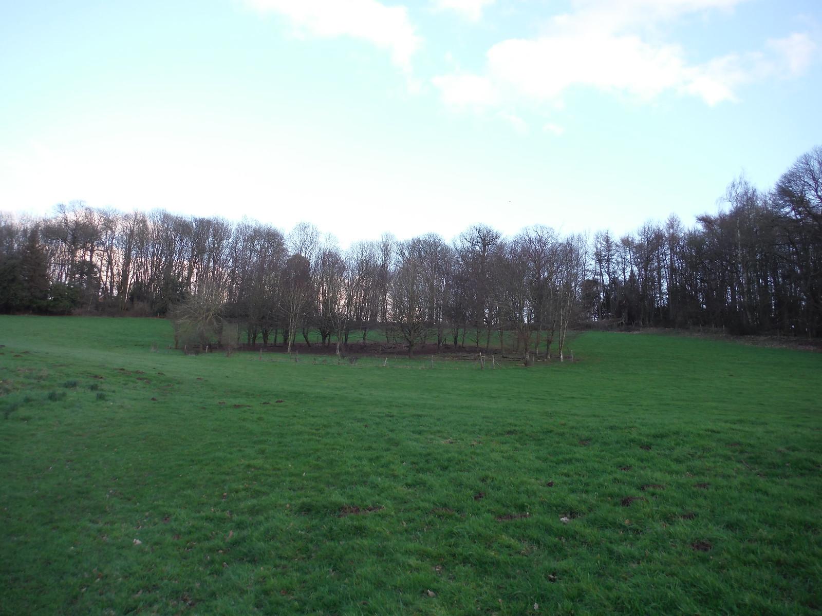 Fenced Clump, Midgham Park SWC Walk 117 Aldermaston to Woolhampton (via Stanford Dingley)