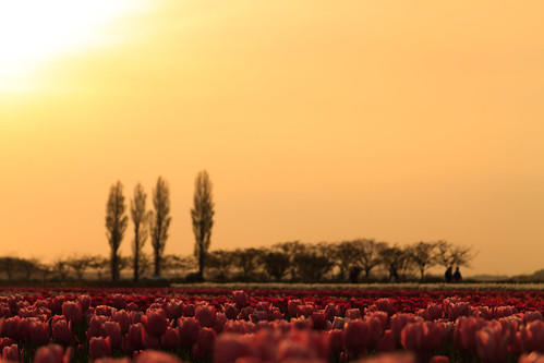 sunset japan jp chiba 日本 sakura 夕焼け 佐倉 千葉 佐倉ふるさと広場