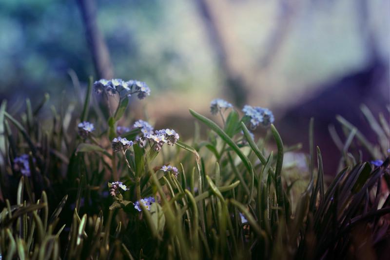 blur-dreamy-texture-texturepalace-45