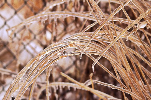 ccphotoworkscom stockphotography istockcom icecovered outdoors nature extremeweather weather icestorm spring ornamentalgrass icy ice ccphotoworks