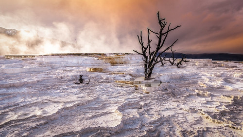 sunset summer usa tree landscape yellowstonenationalpark wyoming travertine mammothhotsprings