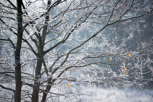 Frosty Branches | by Jannik Peters