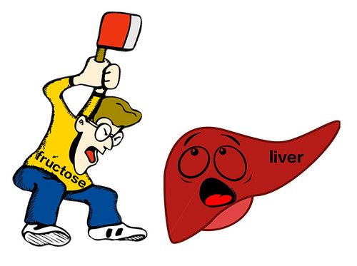 Impact of fructose on the liver   by nutritionaldoublethink