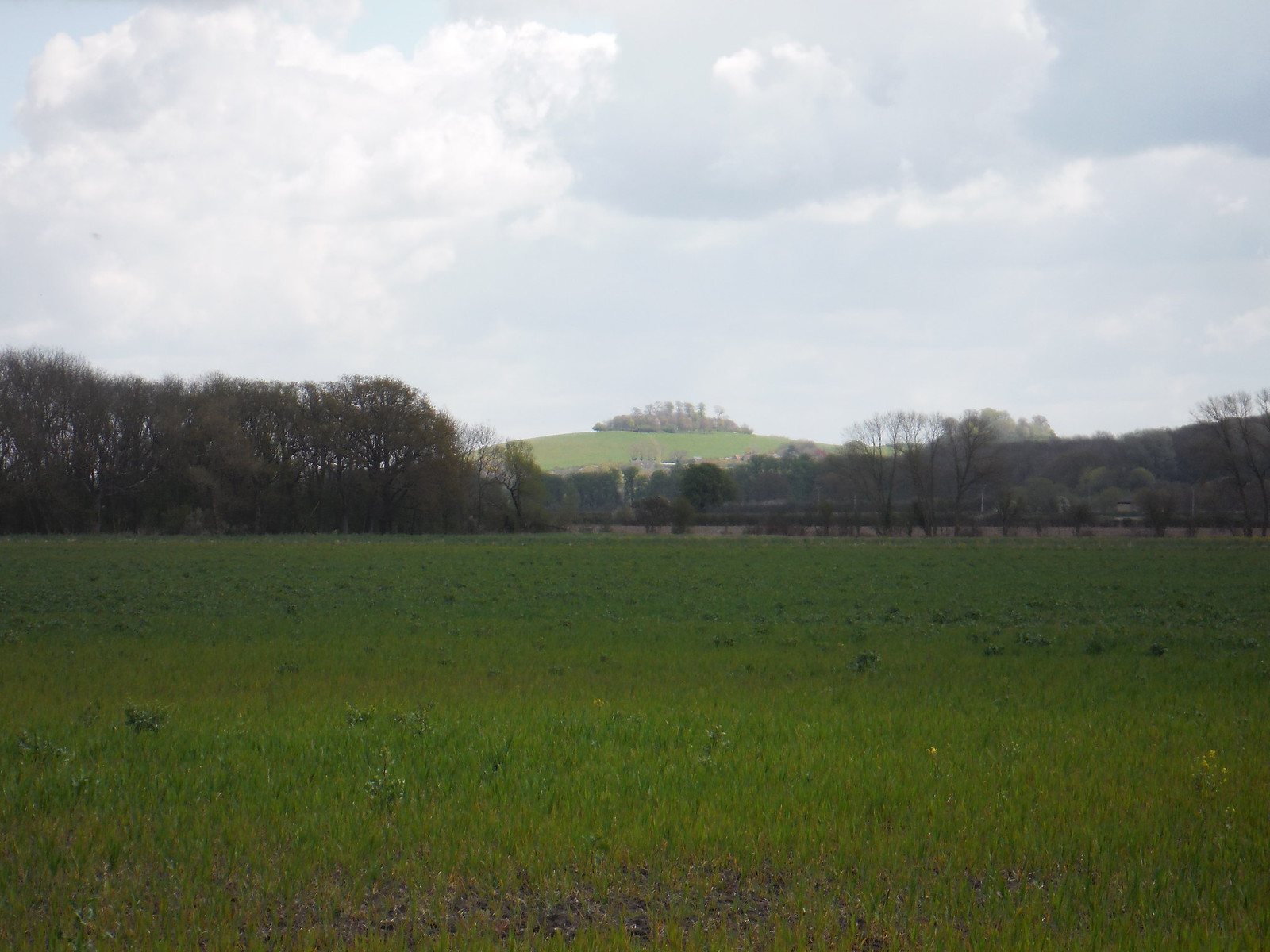 Round Hill and Wittenham Clump (first sighting) SWC Walk 44 - Didcot Circular