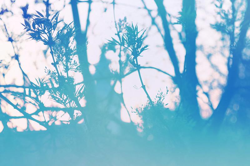 blur-dreamy-texture-texturepalace-19