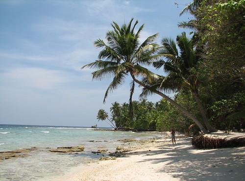 ocean beach palmtree maldives filitheyo filitheyoislandresort