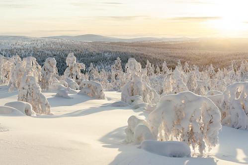 trees winter sunset snow finland inari north lapland fi saariselkä fell 2016 kaunispää