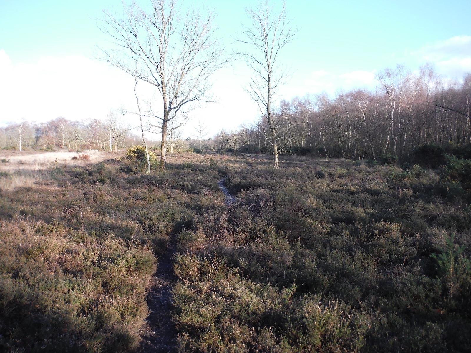 Bucklebury Common (Nature Reserve) SWC Walk 117 Aldermaston to Woolhampton (via Stanford Dingley)