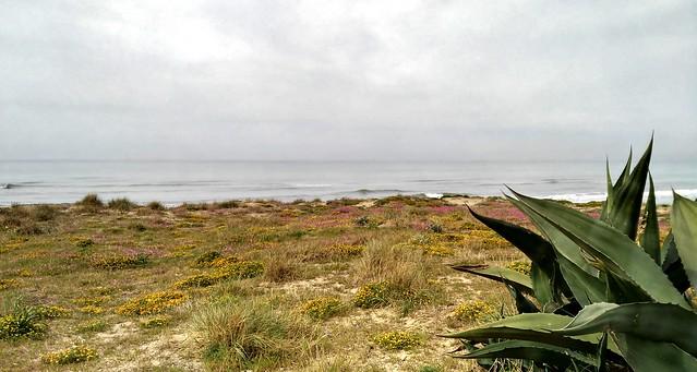 Agave sulla duna