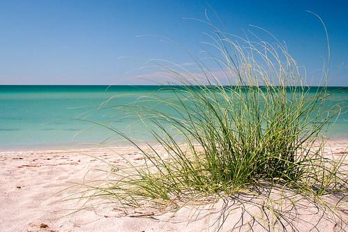 beach gulfofmexico grass florida gulfcoast sharkys veniceflorida