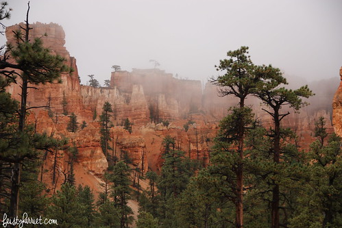 Bryce Canyon National Park_feistyharriet_2015 (8) | by FeistyHarriet