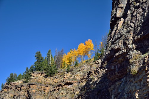 trees cliff nature colorado unitedstates lookingup evergreen blueskies aspen day6 yellowleaves redcliff whiterivernationalforest lookingnorth project365 colorefexpro usroute24 ushwy24 nikond800e capturenx2edited hillsideoftrees