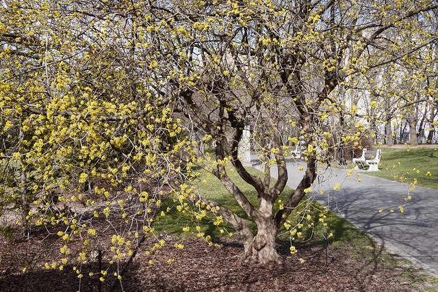 金, 2016-03-11 14:09 - Brooklyn Botanic Garden