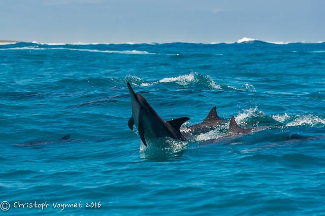 2016 New Caledonia-105