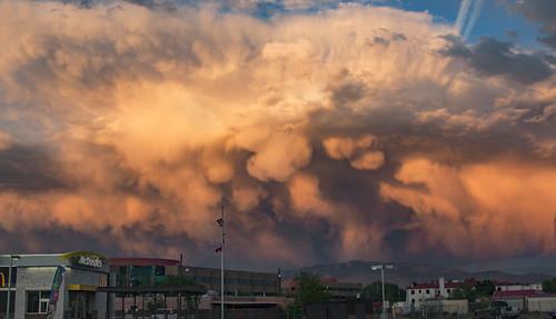 Albuquerque mammatus, 4.23.16