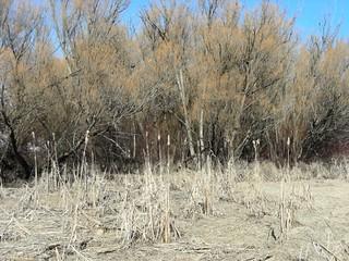 vernon-wetlands-1