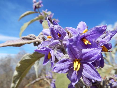 Onderweg naar Mitla - bloem