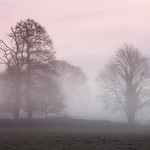 Misty Dawn Trees