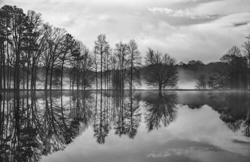 trees blackandwhite bw lake water fog reflections landscape baretrees