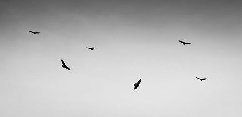 Buzzards Soaring | by www.craigrogers.photography