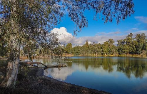 california park ca trees lake water clouds pier afternoon outdoor losgatos vasonalakecountypark