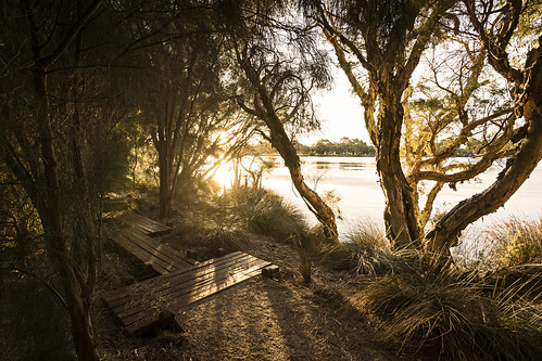 trees light sunset sunlight nature water sunshine river outdoors bush scenery path sony scenic australia wideangle ascot alpha za westernaustralia goldenhour swanriver carlzeiss a99 sal1635z variosonnar163528za variosonnart281635 slta99 stevekphotography