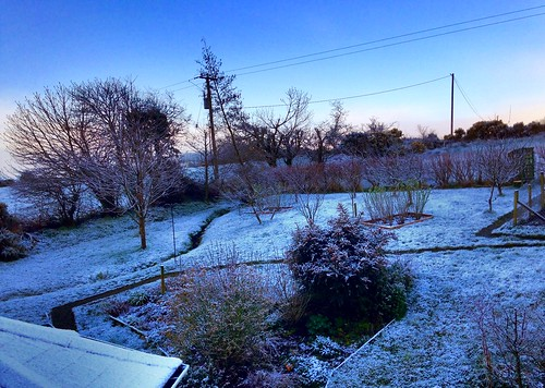 telegraphpole trees snow landscape scenery ireland cork newmarket garden hdr iphone5 2016onephotoeachday