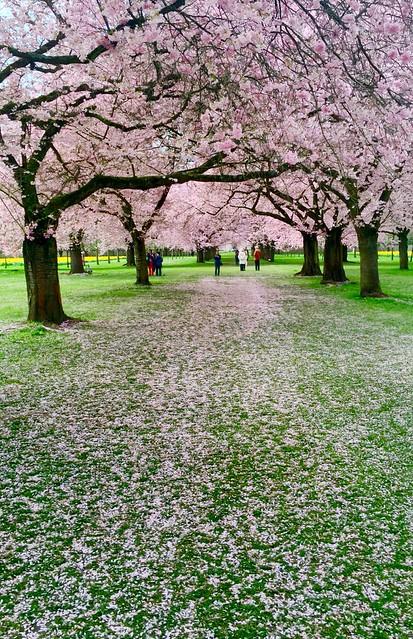 Wandeln auf und unter Blüten